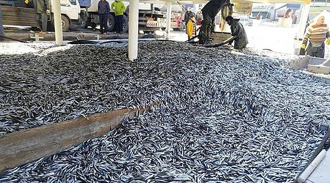1 günde 350 ton hamsi yakaladılar