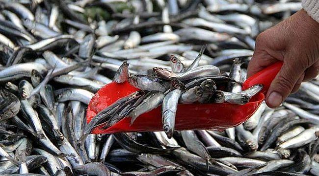 Balık mevsimindeyiz! Daha fazla balık yeyin