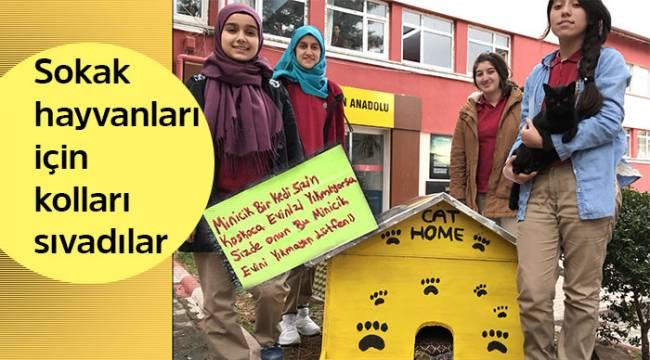 Akşemseddin'in öğrencileri sokak hayvanları için kolları sıvadılar