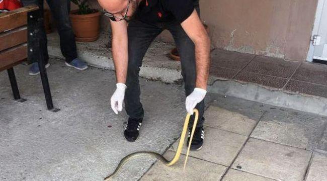 Her yerden yılan fışkırıyor