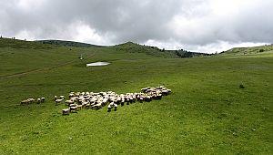 Bölgenin en yüksek dağı Köse dağı