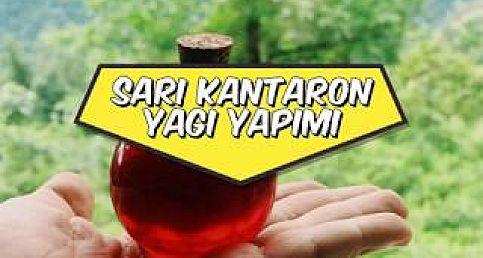 Sarı Kantaron Yağı yapımı - En doğru anlatım